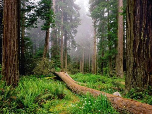 Redwood park California
